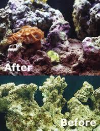 Live Rock Aquascaping Ideas Marine Aquarium Set Up Live Rock Cultivate Beauty U0026 Biological