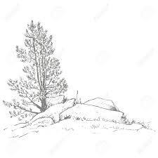 young pine trees and rocks drawing by ink sketch of wild nature
