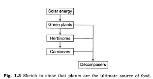 ncert solutions class 7 science chapter 1 nutrition in plants