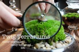 succulent terrarium workshop twig terrariums diy gardens