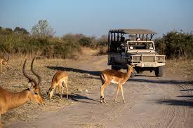 the wonder women of botswana safari the new york times