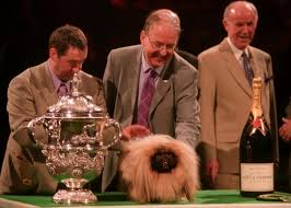 boxer dog crufts 2015 crufts dog show the low down dogbuddy blog