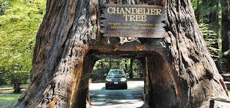 Chandelier Tree Address Chandelier Tree Park Thesecretconsul Com
