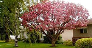 ornamental shaping the arborest expert tree service ltd