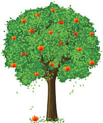 realistic orange tree clipart cliparts and others inspiration