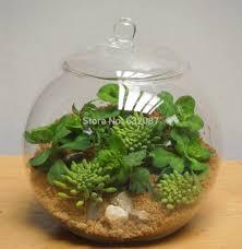 popular decorative glass bottles buy cheap decorative glass 15cm 2pcs pack transparent glass material ball terrarium with lid home decoration micro landscape glass