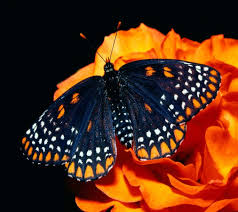 halloween background for facebook butterfly wallpapers hd android apps on google play