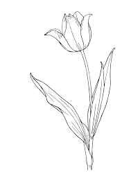 tulip coloring pages kids