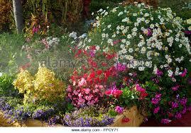australian country garden flowers stock photos u0026 australian