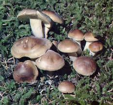 pacific horticulture society wild mushrooms