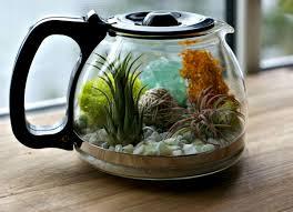 coffee buzz fairy mini garden pinterest terraria and indoor
