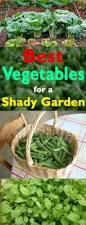 Best Vegetables For Small Garden by Best Vegetables For Shady Garden Balcony Garden Web