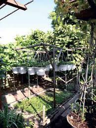 pasadena paradise an organic urban vegetable garden