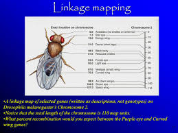 11 5 Linkage And Gene Maps Answers 11 5 Linkage And Gene Salt Lake City Zip Code Map