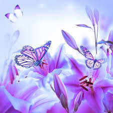 multi colored lilies and butterfly stock photo image of freshness