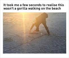 Funny Gorilla Memes - 10 fresh memes dump 3 if you see a gorilla walking on the beach