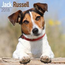 australian shepherd jack russell mix 2018 dog calendars by breed h to r pet prints calendars 2018