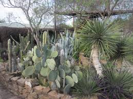texas landscaping ideas landscaping desert landscaping ideas for space outside your home
