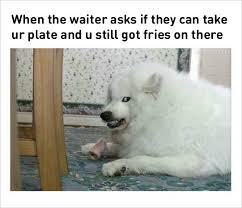 Dog Memes - 10 funny dog memes dog owners share hilarious snapchat of dogs