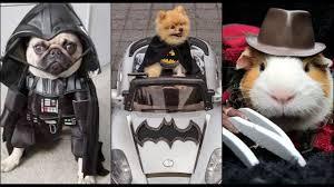 30 cute animals in fancy dress costumes pet halloween ideas