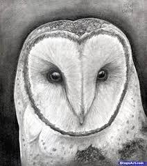 best 25 draw an owl ideas on pinterest how to draw owl owl