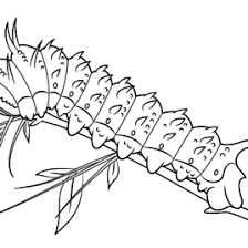 silk worm coloring kids drawing coloring pages marisa