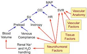 Map Mean Arterial Pressure Cv Physiology Factors Regulating Arterial Blood Pressure