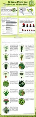 best plants for air quality desk plant air purifier best indoor quality ideas on pinterest