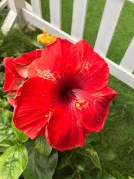 flowers twitter search