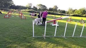 golden doodle dog agility training day 5 youtube