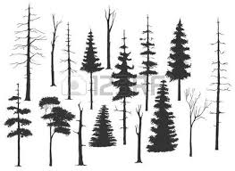 pine tree silhouette stock photos royalty free business images