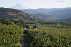 orchard view cherries orchard view inc the dalles or