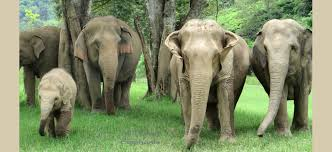 asian elephant ring holder images All things elephants jpg