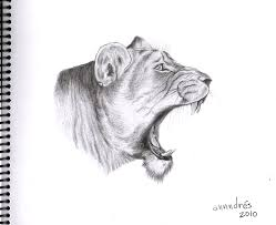 dibujo realista de leona lioness realistic drawing a photo on