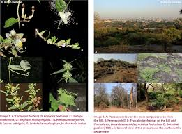 flora of fergusson college campus pune india monitoring changes