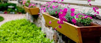 baskets u0026 window boxes u2013 poplar nurseries u2013 garden centre u2013 marks