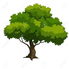 tree for 2d stock photo picture and royalty free image