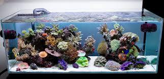 aquarium design aqua design amano 120 p overflow model