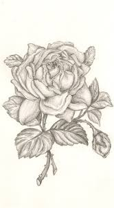 rose sketch by bethan powell on deviantart