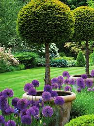 the 25 best large flower pots ideas on pinterest flower