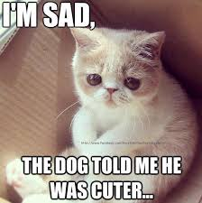 Sad Cat Meme - i m sad cat meme cat planet cat planet