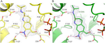 structural and functional characterization of the enantiomers of