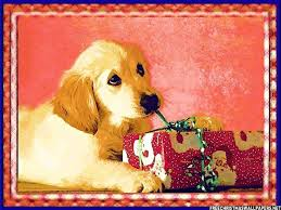 cute dog christmas wallpapers 906 best free christmas wallpaper compilation images on pinterest