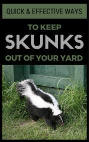 quick u0026 effective ways to keep skunks out of your yard