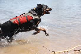 belgian malinois vest the modern bark dog training tips may 2013
