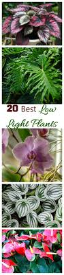 best low light house plants low light indoor plants house plants that thrive in lower light