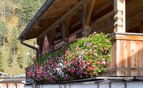 geranien balkon file achenkirch urlaub 2013 balkon mit geranien seealm 001 jpg