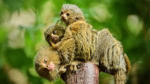 bentley orangutan the secret life of the zoo on demand all 4