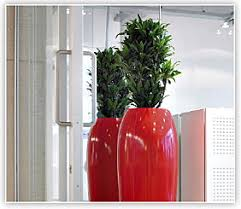 plant for office plant rentals plants for rent interior plant service tx