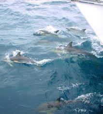 top ten places to see dolphins in new zealand poms away